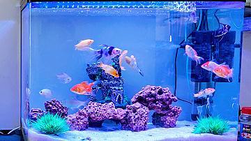 Първи аквариум - как да го направите и стартирате