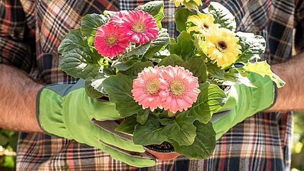 10 съвета за красиви цветя