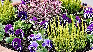 14 лесни идеи и полезни съвети за вашата градина