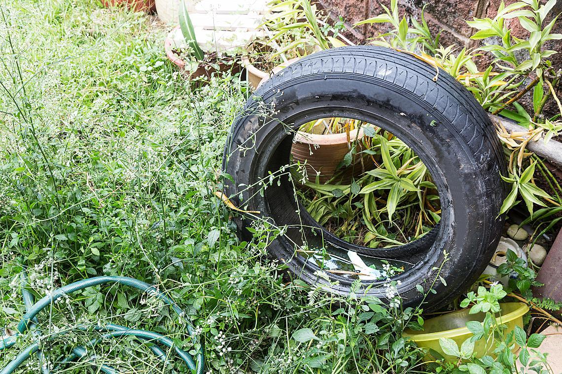 Застоялата вода, задържана в гуми и контейнери в мръсна среда, развъжда комари.