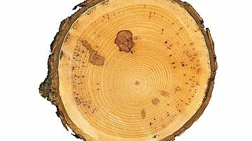 Дъска за рязане – ръчно изработена от дърво