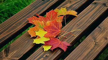 Есенните дарове на природата в декорацията на дома