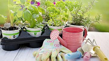 Няколко съвета как да поддържате градината си в идеално състояние (',част 1)