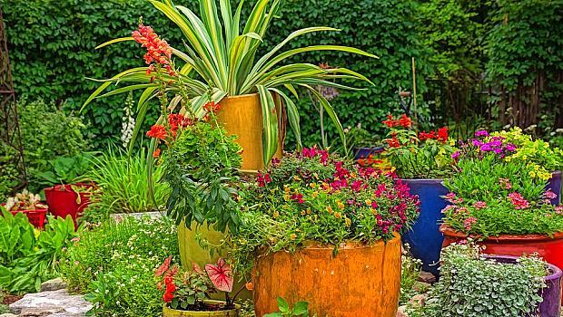 Идеи и съвети как да планирате вашата градина