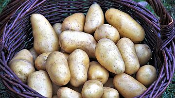 Не само за готвене: 8 приложения на картофите, за които не подозирате