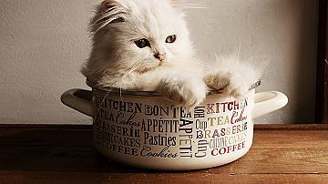 17 полезни и практични съвети за вашата котка