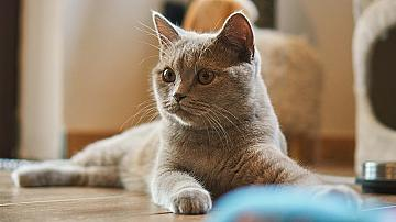 Как да направим лесни и евтини играчки за котката