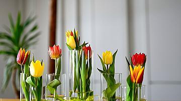 Консервиране на цветя с глицерин