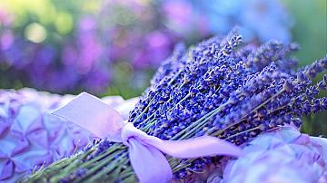 10 полезни съвети за премахване на миризмите в дома