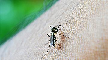 6 прости начина как да се отървете от комарите в градината
