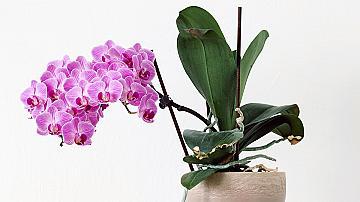 Ето какви растения да сложиш в спалнята и да подобриш съня си