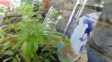 Лесна идея как да поливаме цветята, докато не сме си у дома