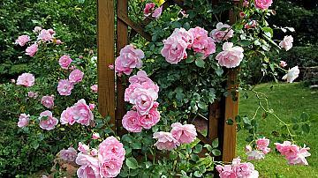 8 идеи за начинаещи любители градинари